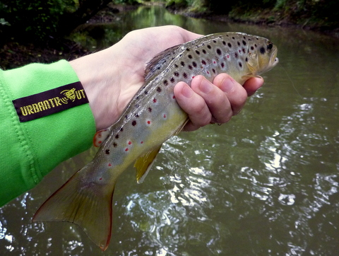 Urbantrout trout 2