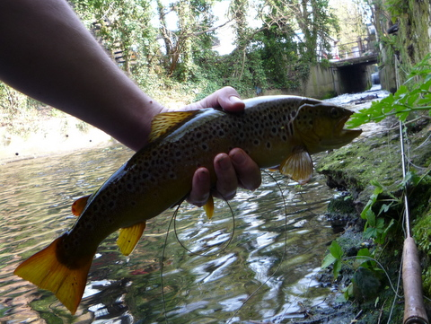 A trout called Kate - Jeremiah Quinn