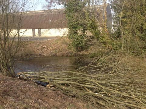 Pleached trees on Anton - Aquamaintain