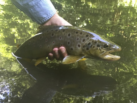 Bristol Frome trout - Robert Brown